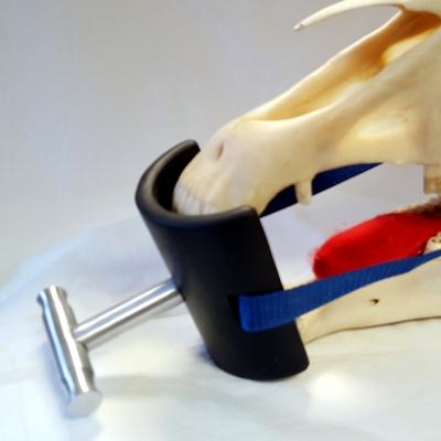 Dental- Röntgen -Maulkeil nach Johanna Castell